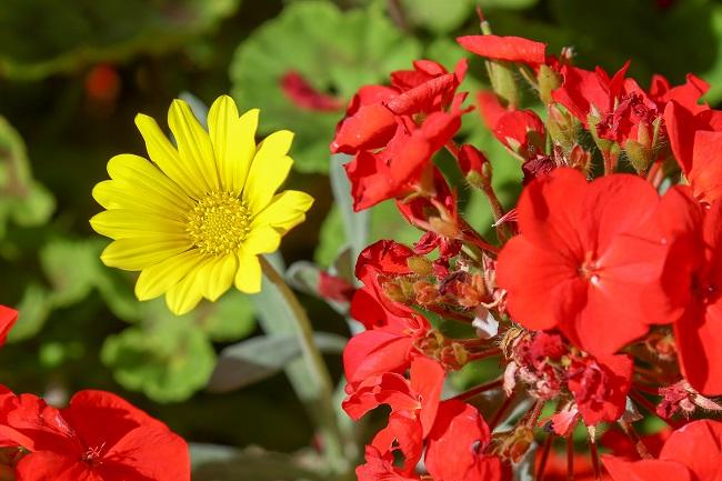 The flowers at IRT William Beach Gardens